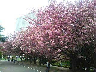 http://www.onoderamasaru.jp/wp/wp-content/uploads/2009/04/20060519164103.jpg
